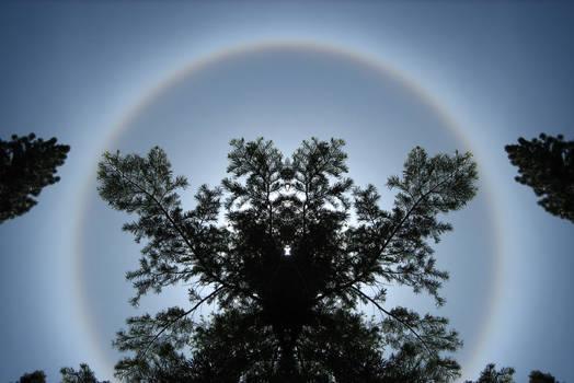 Tahoe Tree Spirit