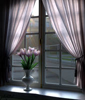 Tulips on the window by phdv