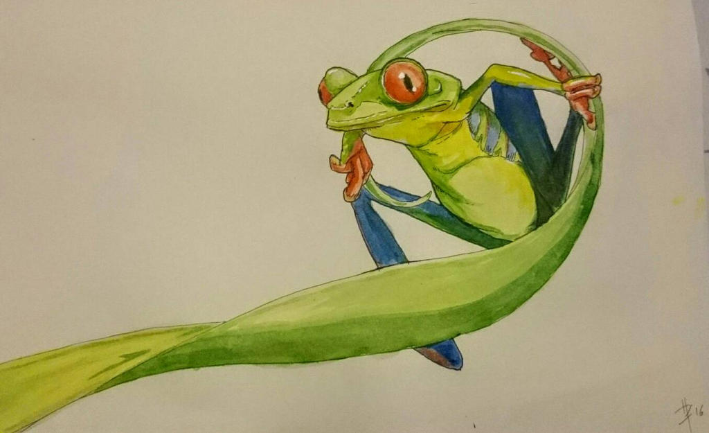 red eyed tree frog by metanull
