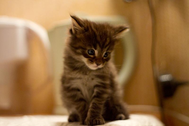 Maji svatki za gnjaviti...[Ne zamerite mi...] Cutie_black_by_pykodelbi-d4nhbri