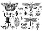 Bug Board by azraelengel