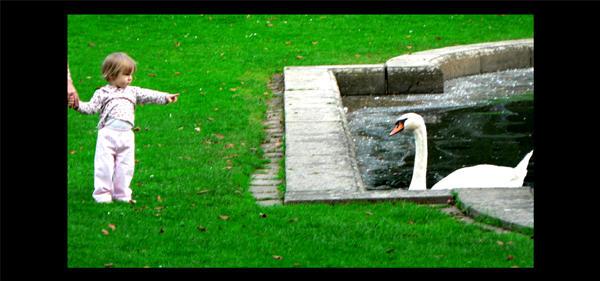 -she and swan- by mujaermundur