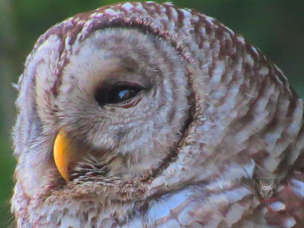 Eye Of The Beholder by wolfwings1