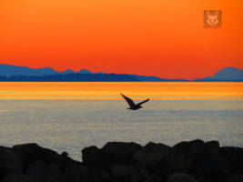 Seagull Between Sea, Land And Air