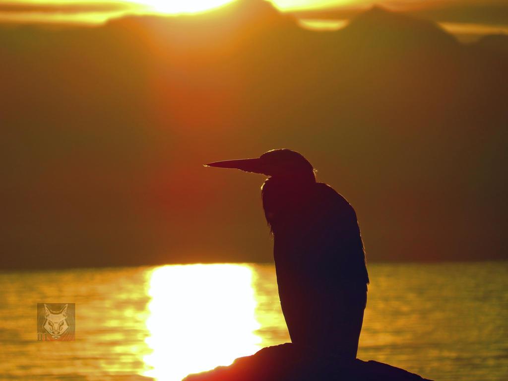 Heron Bathed In Sunlight by wolfwings1