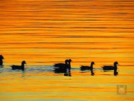 Golden Ducks In A Row by wolfwings1