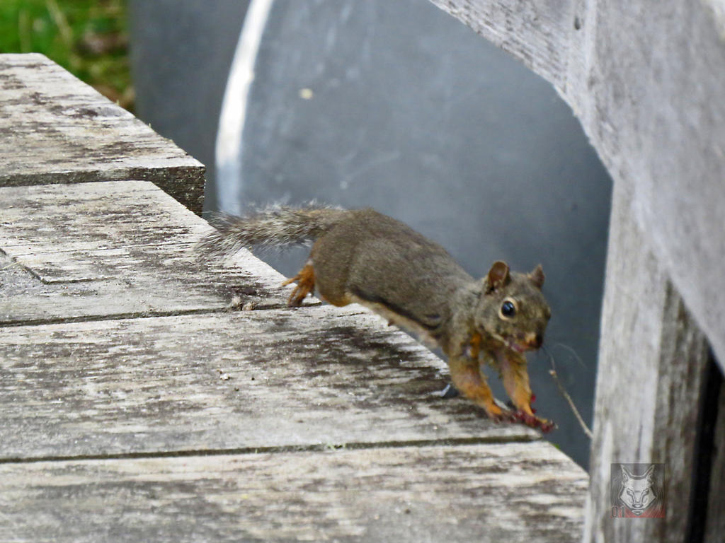 Running Squirrel by wolfwings1