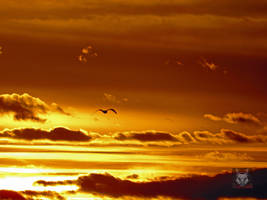 Seagull Flying Into The Sunset by wolfwings1