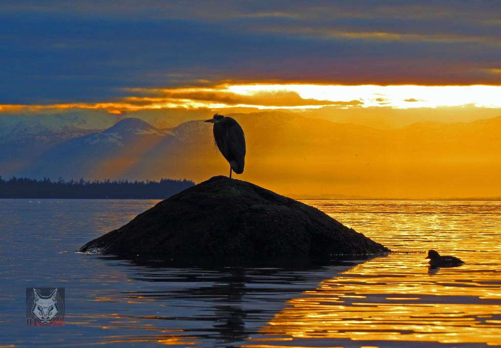 Heron And Sun Rays by wolfwings1