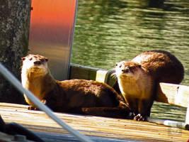 Goofy Otters by wolfwings1