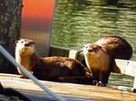 Goofy Otters