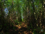 The Shadowed Trail