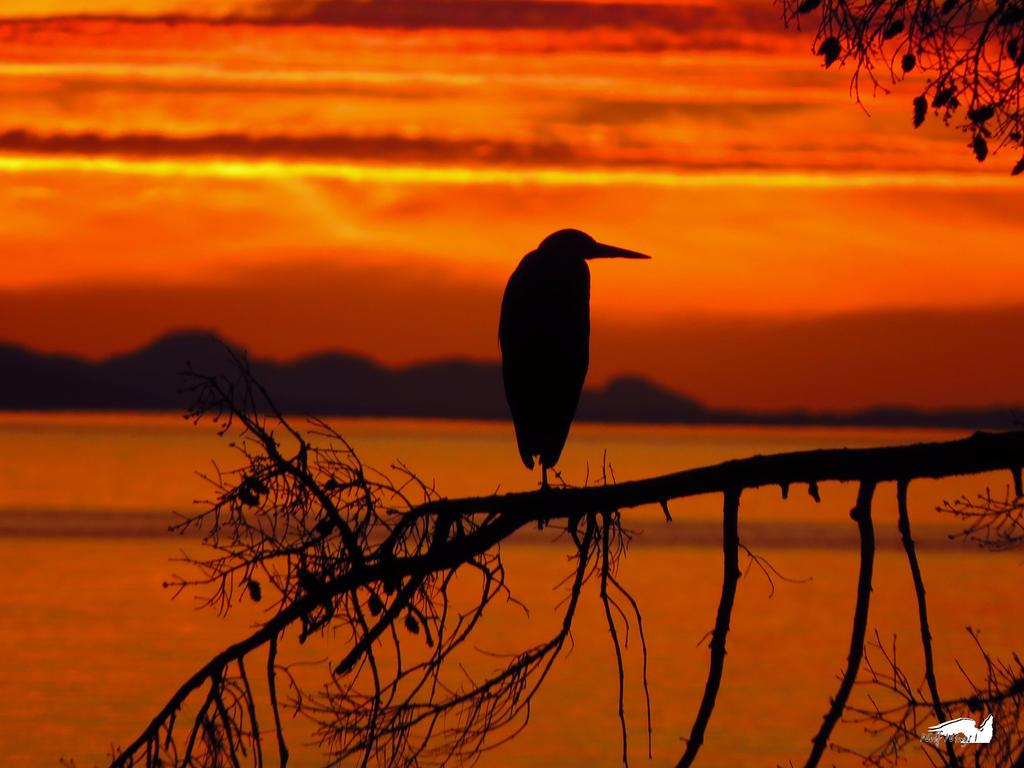 The Halloween Heron by wolfwings1