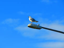 The Watcher Seagull. by wolfwings1