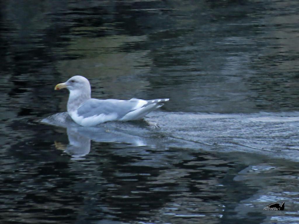 A Seagulls Arrow by wolfwings1