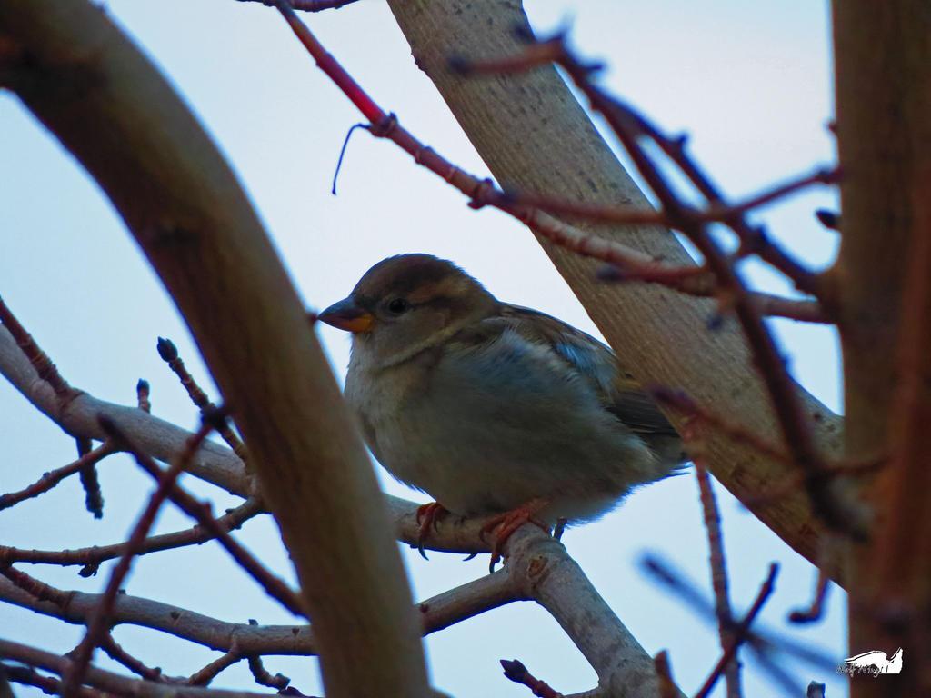 Orange Under Beak Bird by wolfwings1