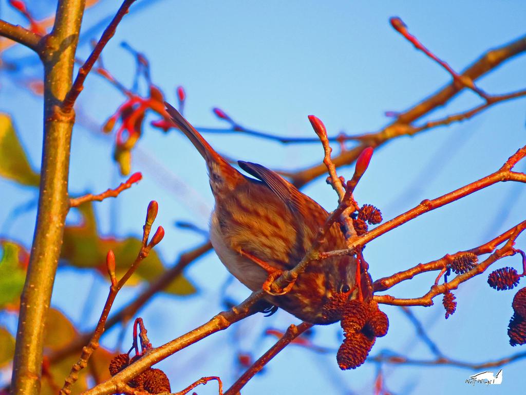 Just Us Micro Pinecones Here by wolfwings1