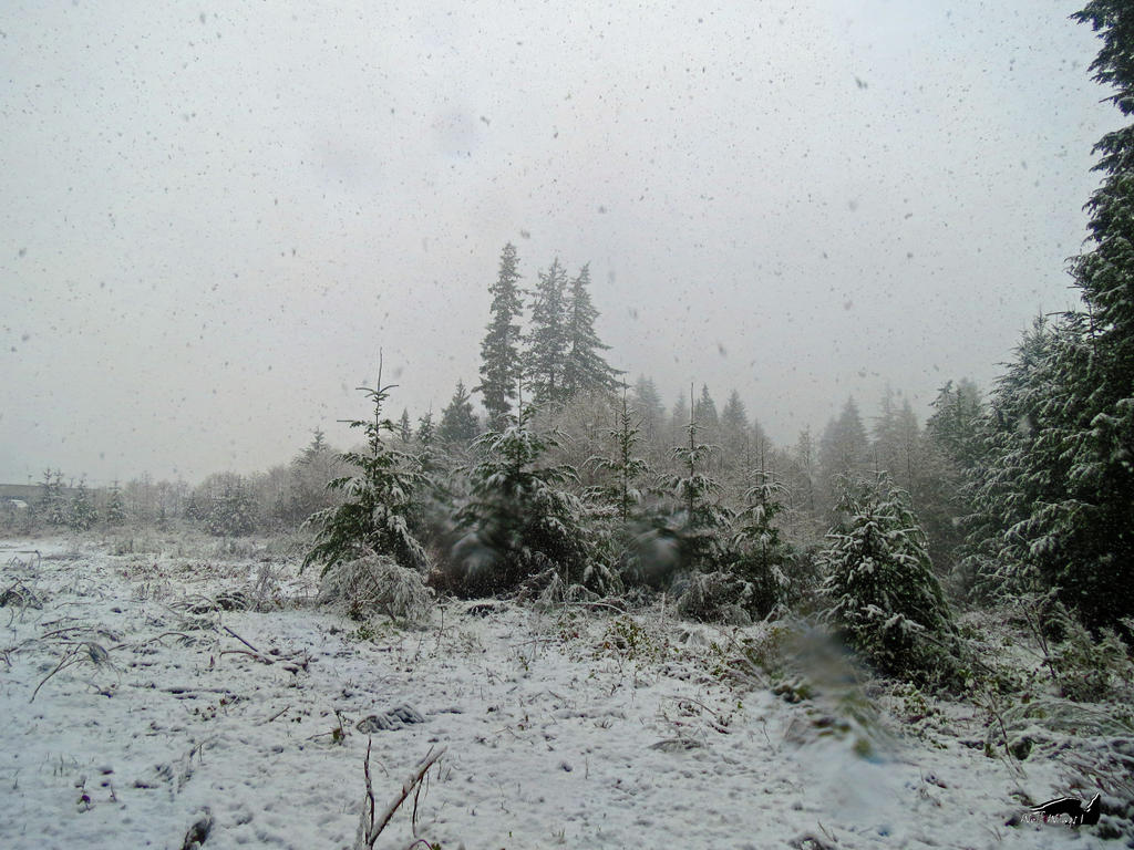 A Great Snowy Field by wolfwings1