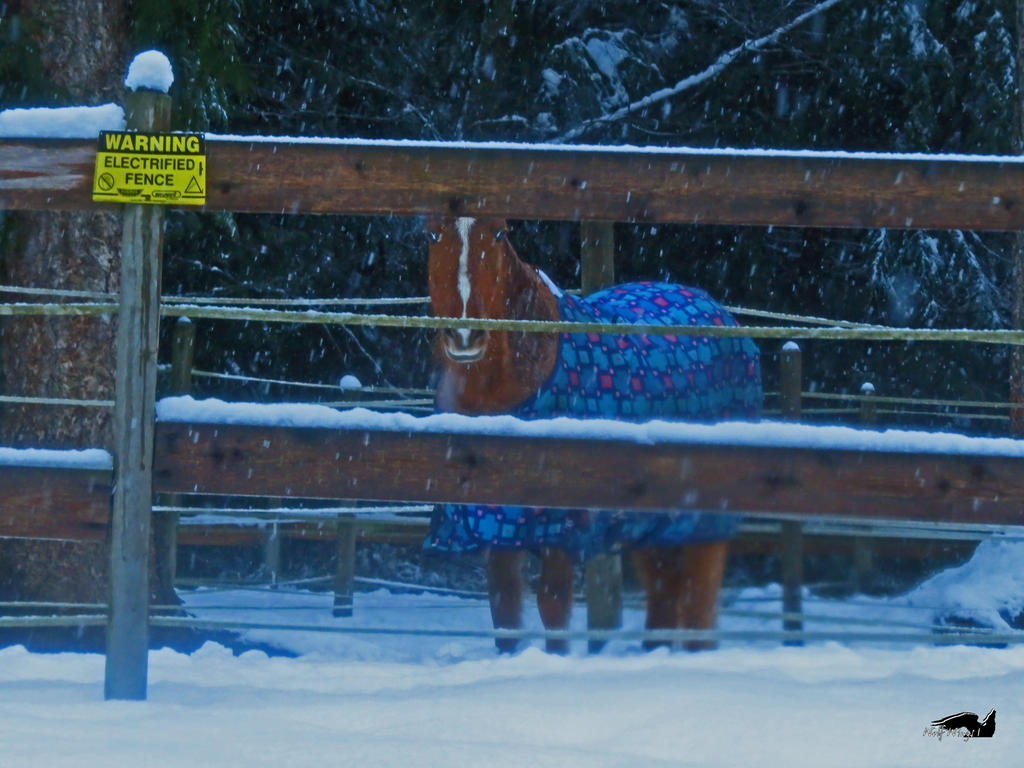 Horse In The Snow by wolfwings1