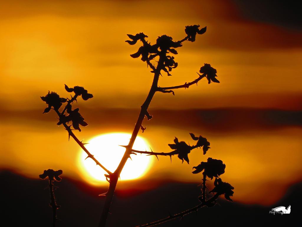 Sun Setting On Blackberries by wolfwings1