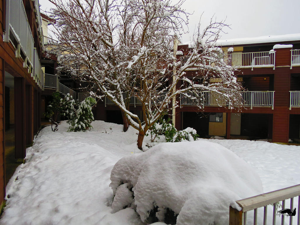 A Nights Snowfall by wolfwings1