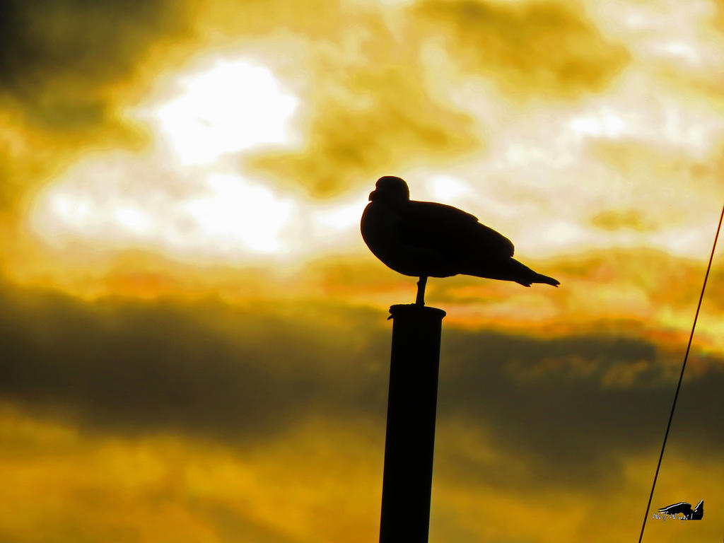High Guard Seagull by wolfwings1