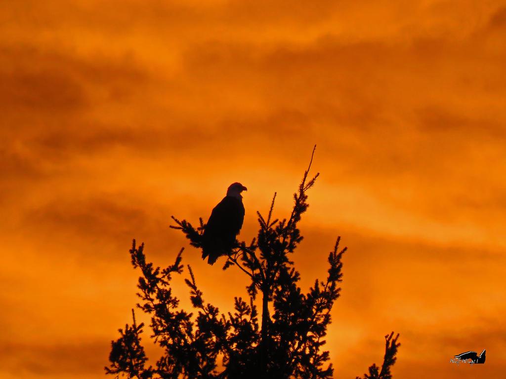 Halloween Eagle by wolfwings1