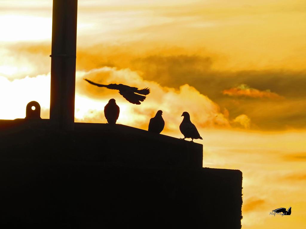 Shadows Of Pigeons by wolfwings1