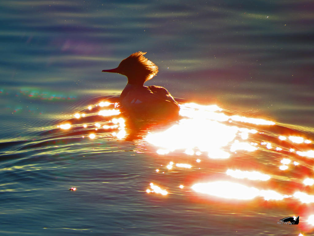 Merganser Through Stars by wolfwings1