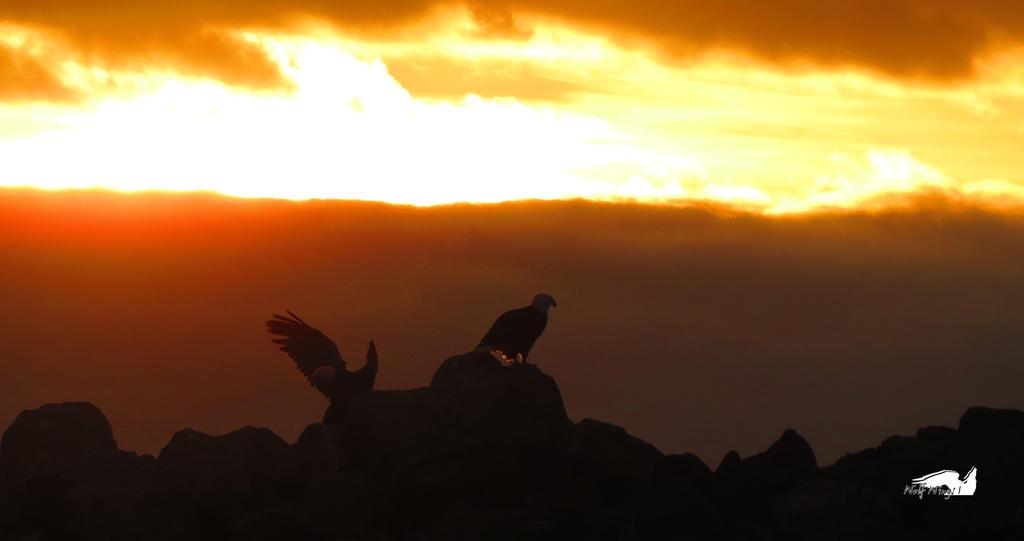 Pair Of Eagles Landing On Rocks by wolfwings1