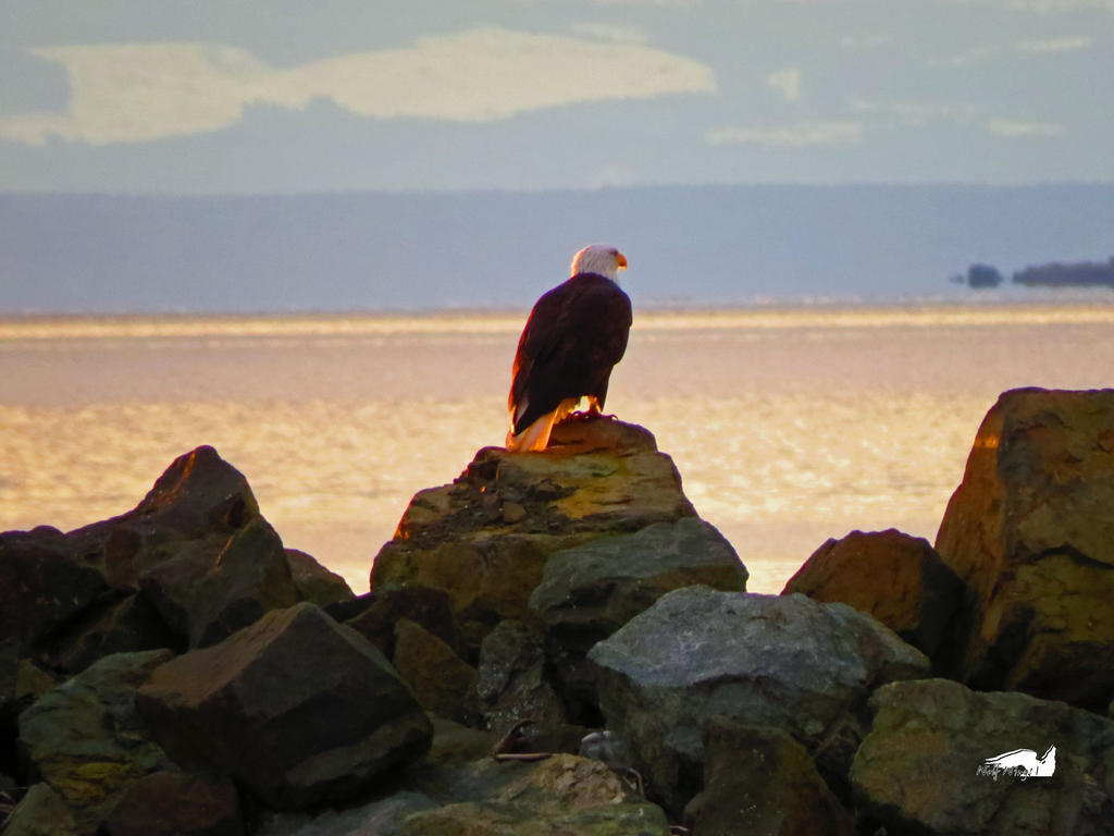 Eagle On Rocky Lookout by wolfwings1
