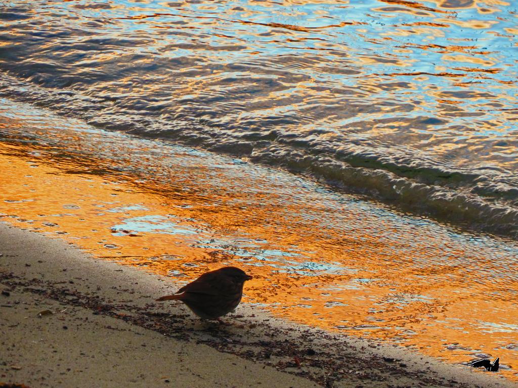 Sea Sparrow by wolfwings1