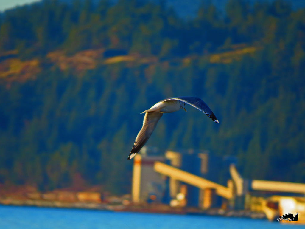 Seagull Going By by wolfwings1