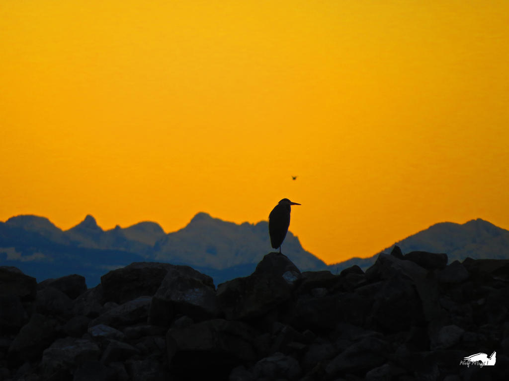 Heron And Distant Friend Against Mountains by wolfwings1