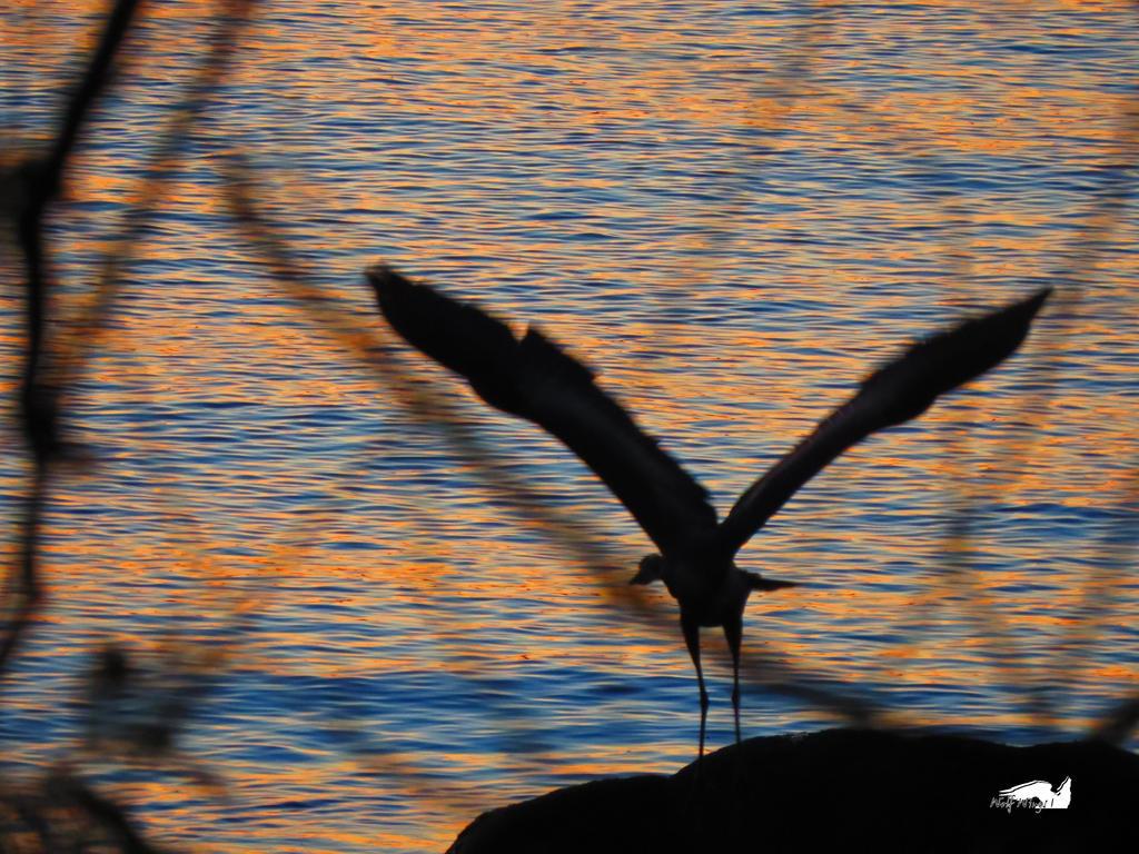 Canadian Goose In Flight by wolfwings1
