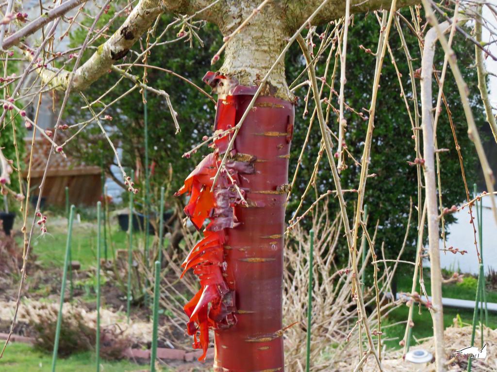Debarked Tree by wolfwings1
