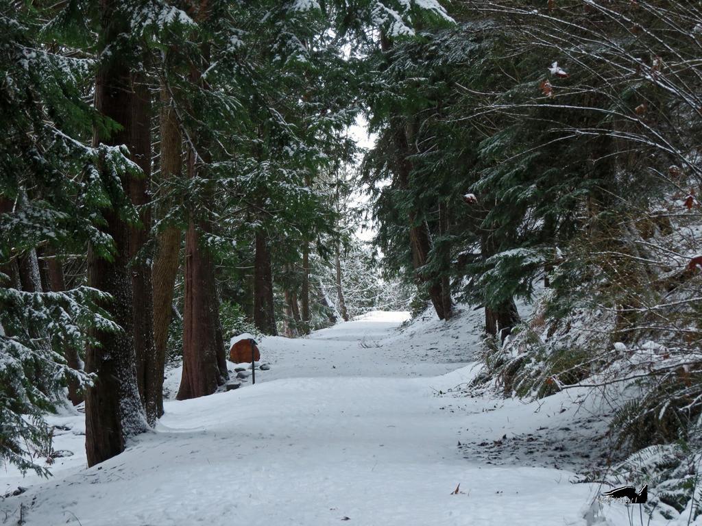 AWalk Through A Snowy Trail by wolfwings1