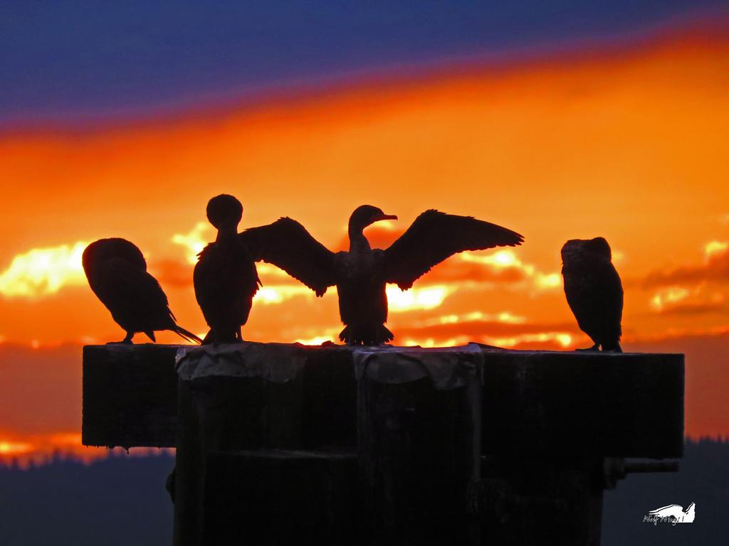 Four Shadow Cormorants by wolfwings1