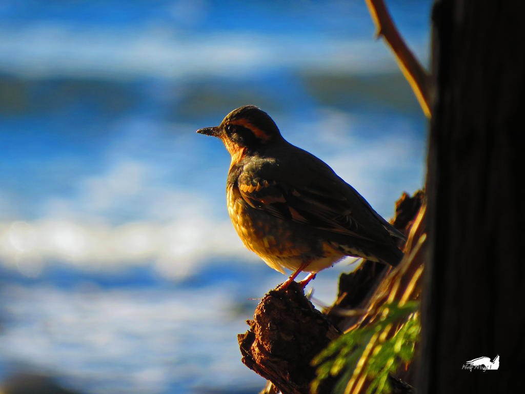 Enjoying Watching The Waves by wolfwings1