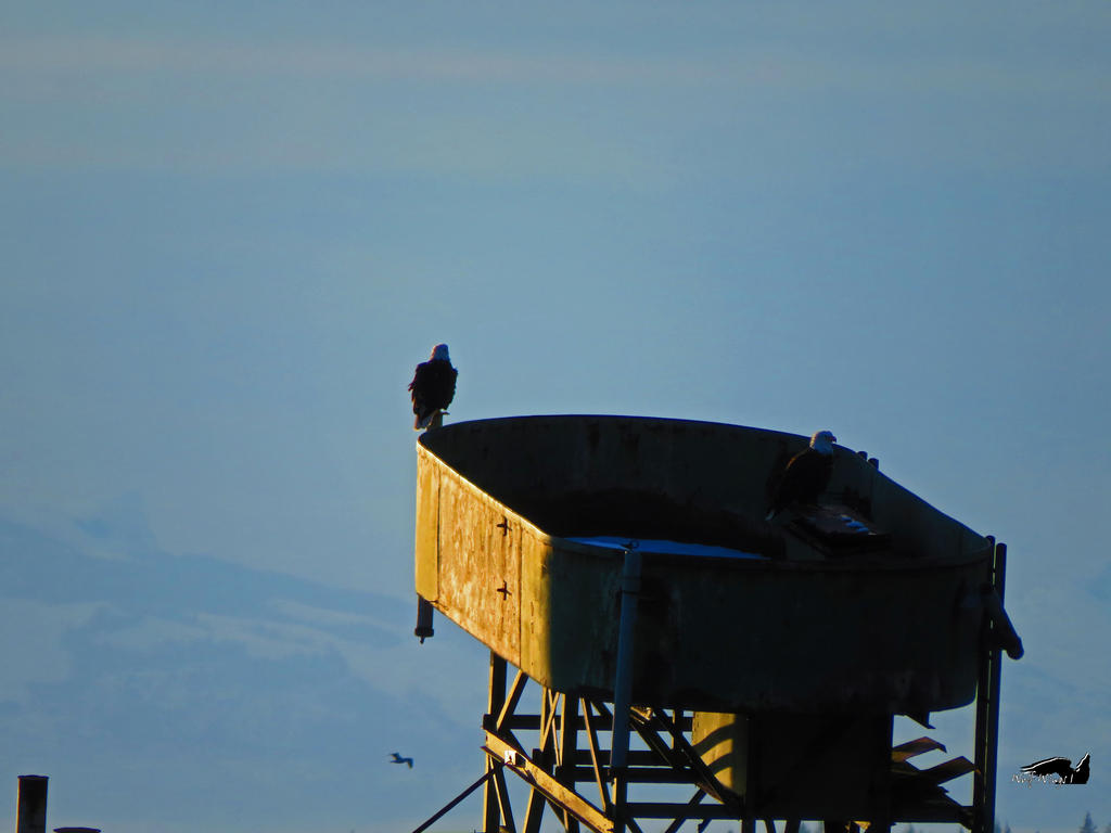 Bald Eagles On Old Concrete Ship by wolfwings1