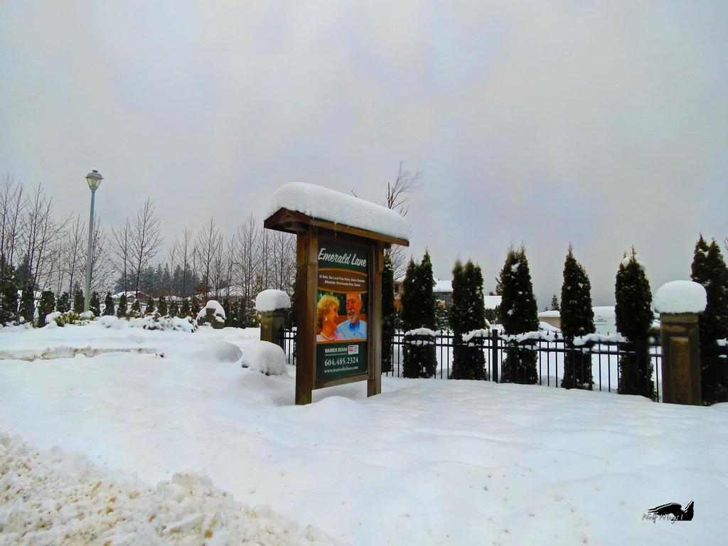 Retire In Snow by wolfwings1