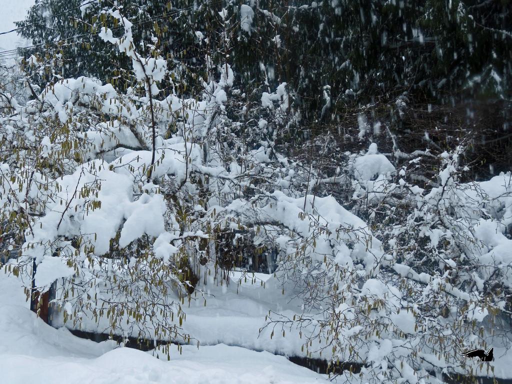 Woods All Snowed Up by wolfwings1