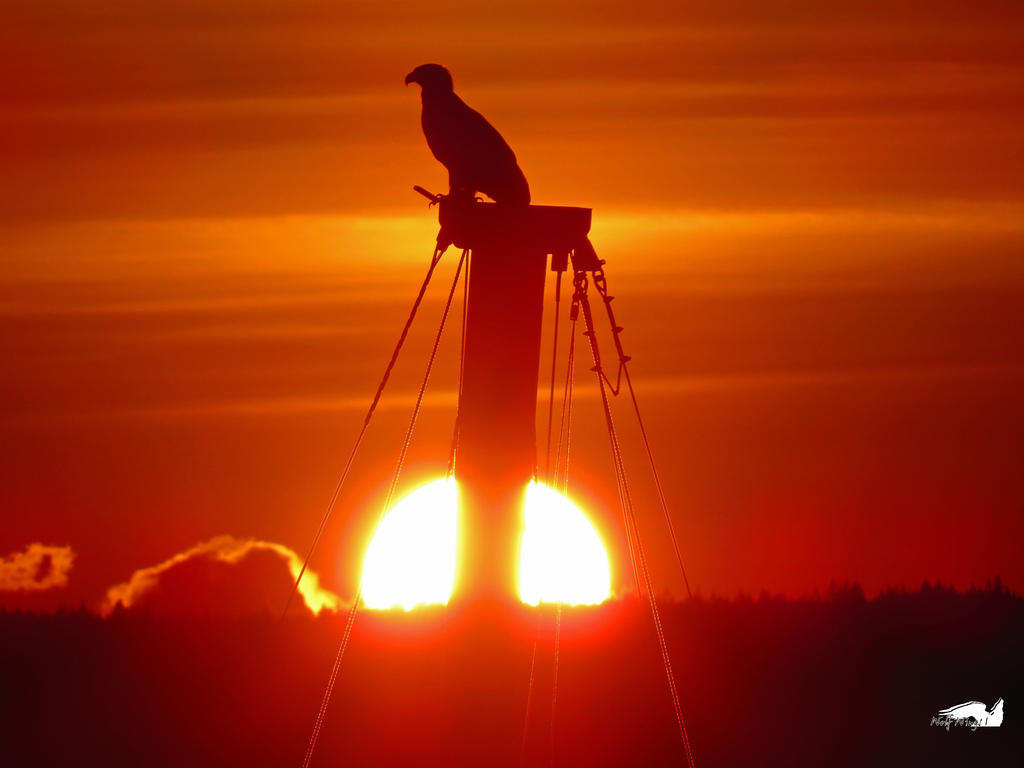 The Setting Sun Eagle by wolfwings1