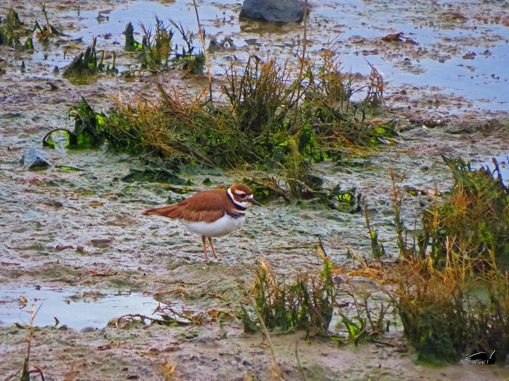Kill Deer In High Tide Swamp by wolfwings1