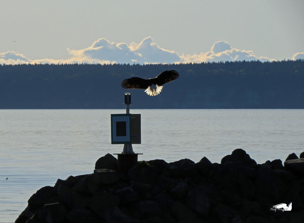 Eagle Landing On Marker by wolfwings1