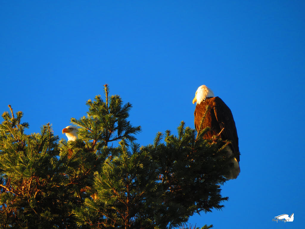 Eagles On High Watch by wolfwings1