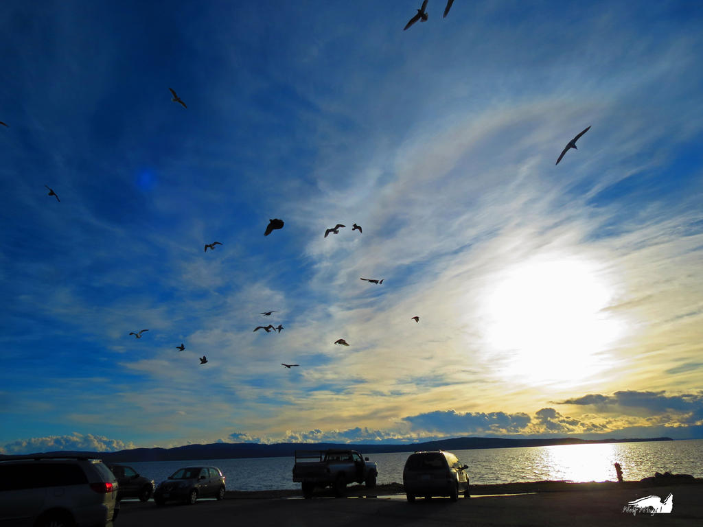 Seagulls Circling Overhead by wolfwings1