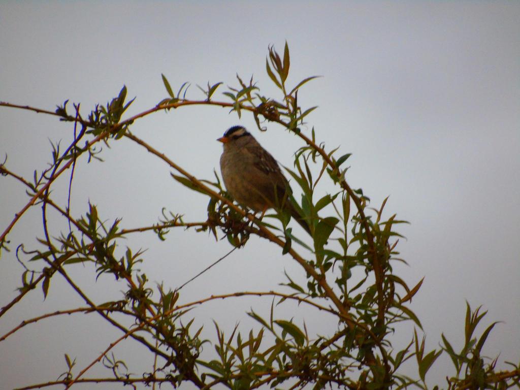 A Sparrow In Vines  by wolfwings1