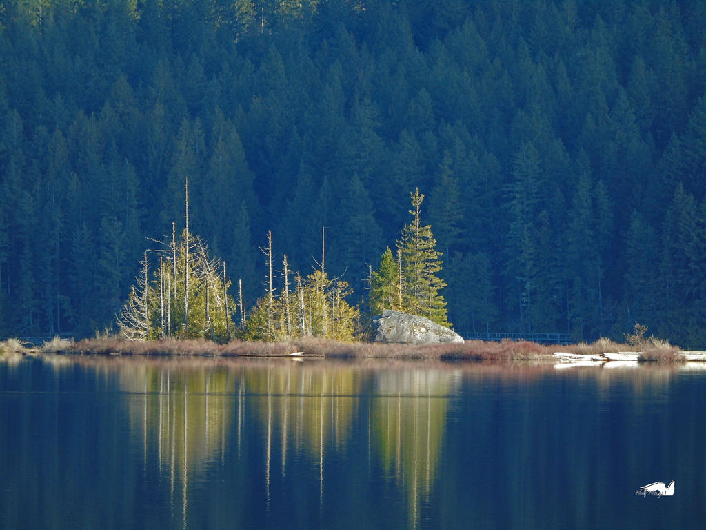 Trees And Lines in reflection by wolfwings1