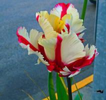 Road Flower by wolfwings1